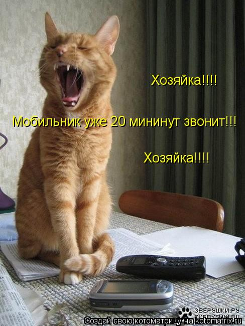 Котоматрица: Мобильник уже 20 мининут звонит!!! Хозяйка!!!! Хозяйка!!!!