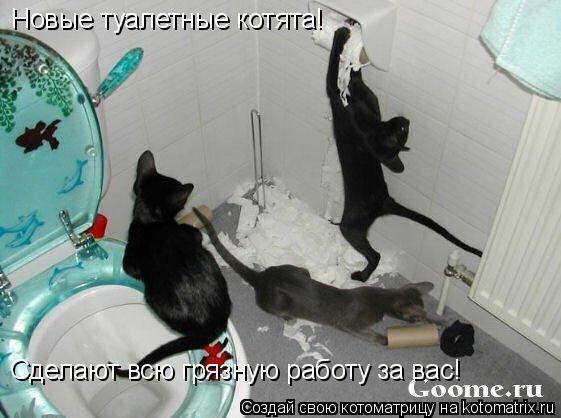 Котоматрица: Новые туалетные котята! Сделают всю грязную работу за вас!