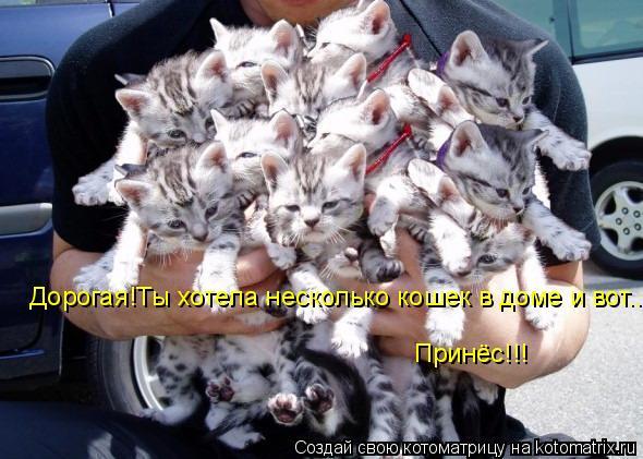 Котоматрица: Дорогая!Ты хотела несколько кошек в доме и вот... Принёс!!!