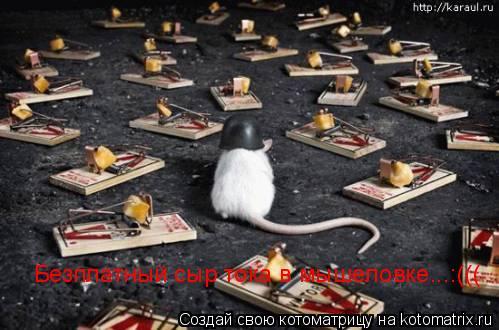 Котоматрица: Безплатный сыр тока в мышеловке...:(((