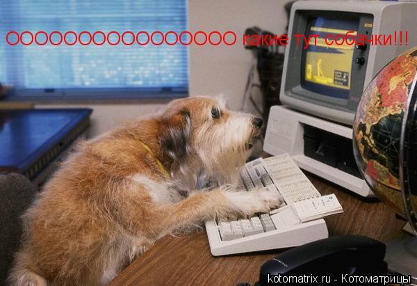 Котоматрица: ОООООООООООООООО какие тут собачки!!!