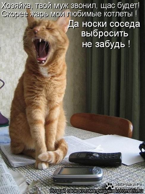 Котоматрица: Хозяйка, твой муж звонил, щас будет!   Скорее жарь мои любимые котлеты ! Да носки соседа  выбросить не забудь !