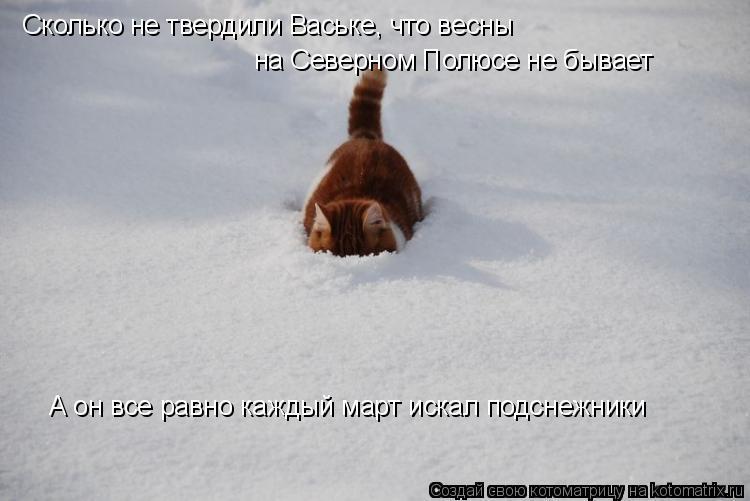 Котоматрица: Сколько не твердили Ваське, что весны  на Северном Полюсе не бывает А он все равно каждый март искал подснежники