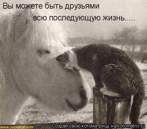 Котоматрица: Вы можете быть друзьями  всю последующую жизнь.....