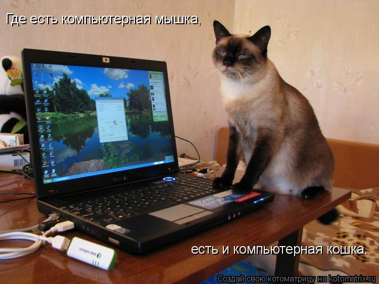 Котоматрица: Где есть компьютерная мышка, есть и компьютерная кошка.
