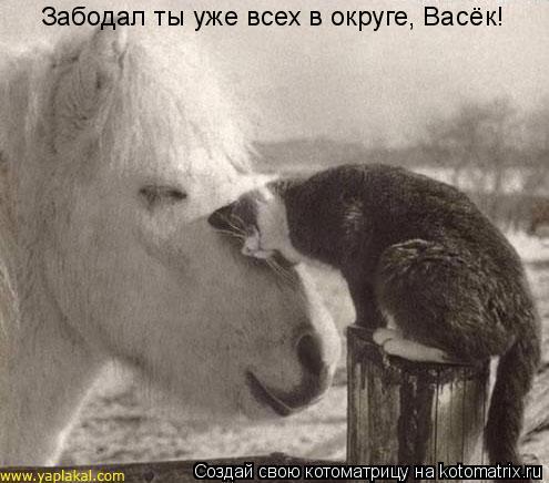 Котоматрица: Забодал ты уже всех в округе, Васёк!