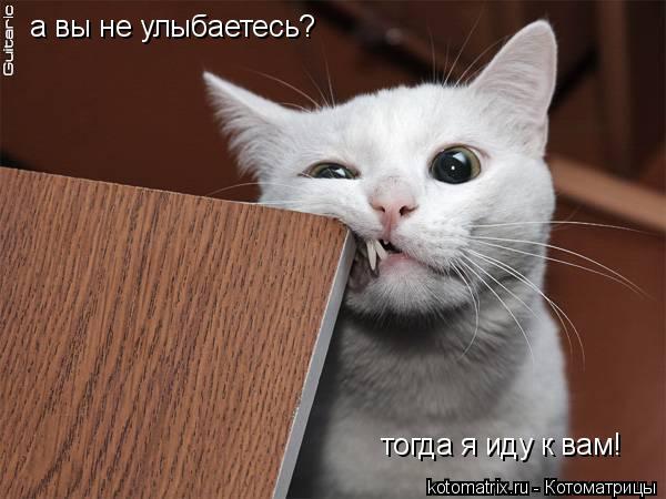 Котоматрица: а вы не улыбаетесь? тогда я иду к вам!