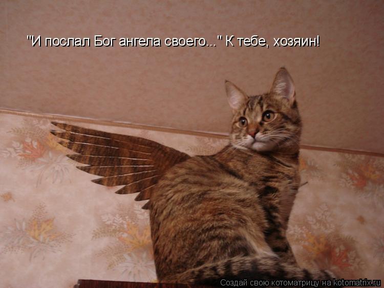 """Котоматрица: """"И послал Бог ангела своего..."""" К тебе, хозяин!"""