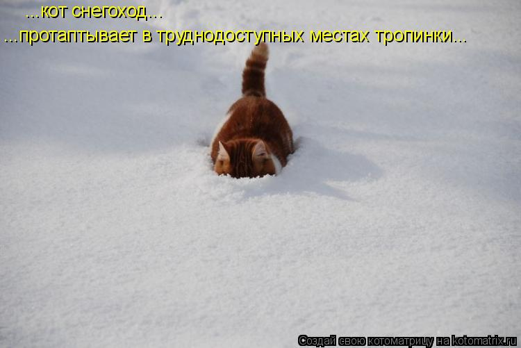 Котоматрица: ...кот снегоход... ...протаптывает в труднодоступных местах тропинки...