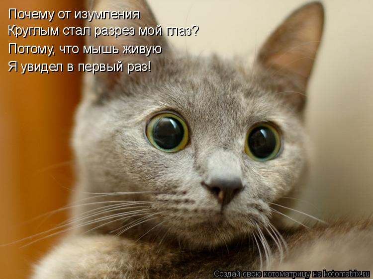 Котоматрица: Почему от изумления Круглым стал разрез мой глаз? Потому, что мышь живую Я увидел в первый раз!