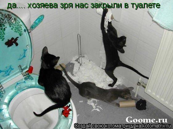 Котоматрица: да.... хозяева зря нас закрыли в туалете
