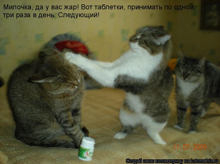 Котоматрица: Милочка, да у вас жар! Вот таблетки, принимать по одной  три раза в день. Следующий!