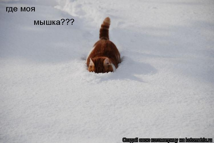 Котоматрица: где моя мышка???