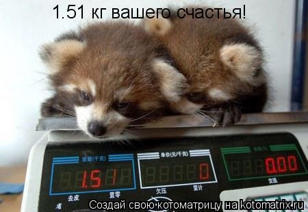 Котоматрица: 1.51 кг вашего счастья!