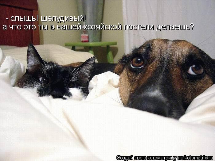 Котоматрица: - слышь! шелудивый!  а что это ты в нашей хозяйской постели делаешь?