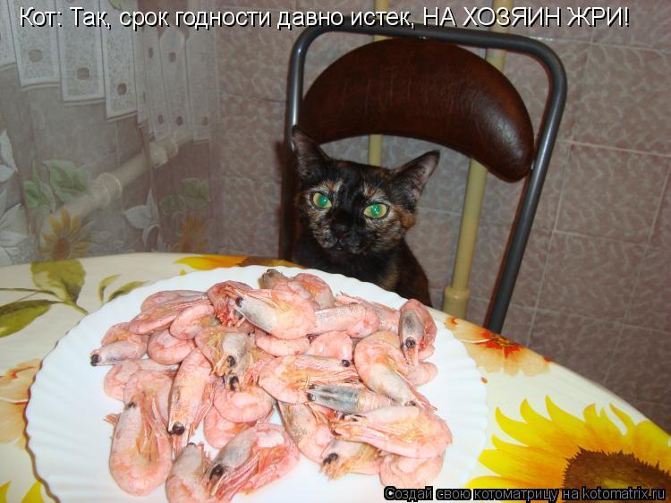 Котоматрица: Кот: Так, срок годности давно истек, НА ХОЗЯИН ЖРИ!
