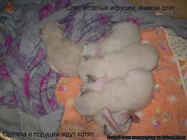 Котоматрица: Спят усталые игрушки, книжки спят... Одеяла и подушки ждут котят...