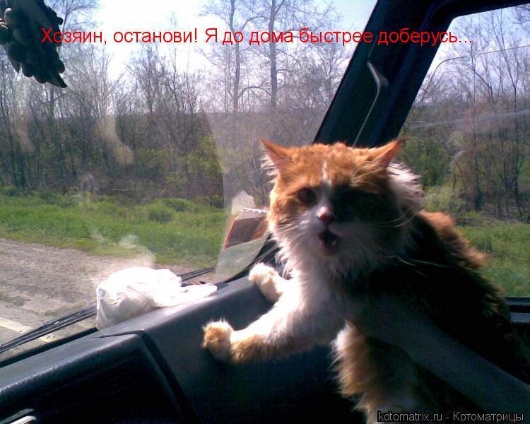 Котоматрица: Хозяин, останови! Я до дома быстрее доберусь...