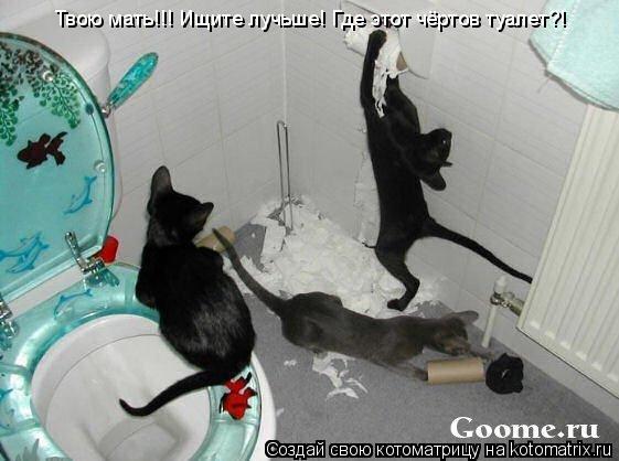 Котоматрица: Твою мать!!! Ищите лучьше! Где этот чёртов туалет?!