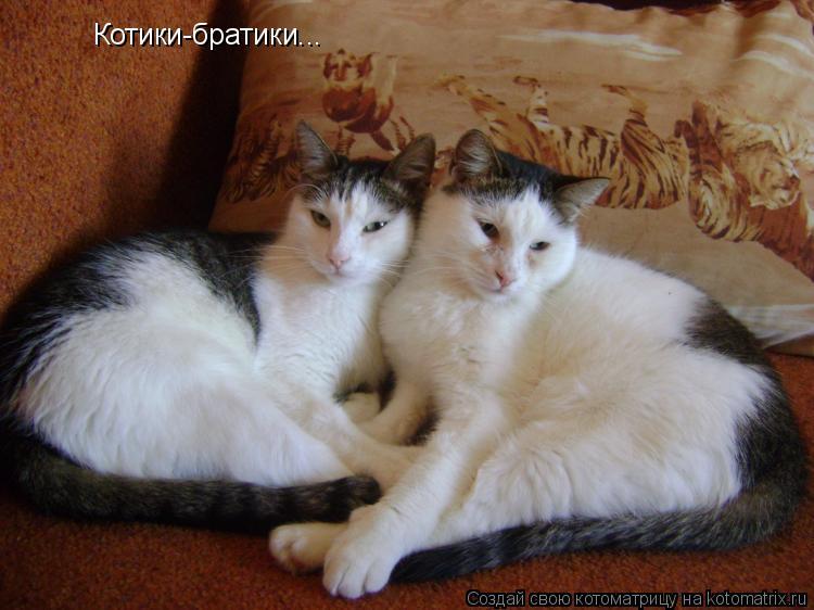 Котоматрица: Котики-братики...