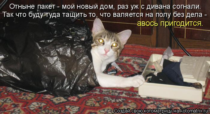 Котоматрица: Отныне пакет - мой новый дом, раз уж с дивана согнали. Так что буду туда тащить то, что валяется на полу без дела - авось пригодится.