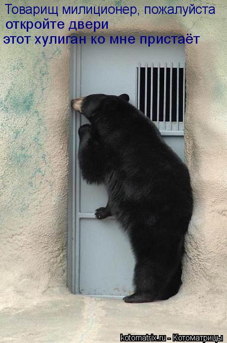 Котоматрица: Товарищ милиционер, пожалуйста откройте двери этот хулиган ко мне пристаёт