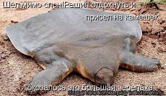 Котоматрица: Шёл мимо слон!Решил отдохнуть и  присел на камешек окозалось это большая черепаха