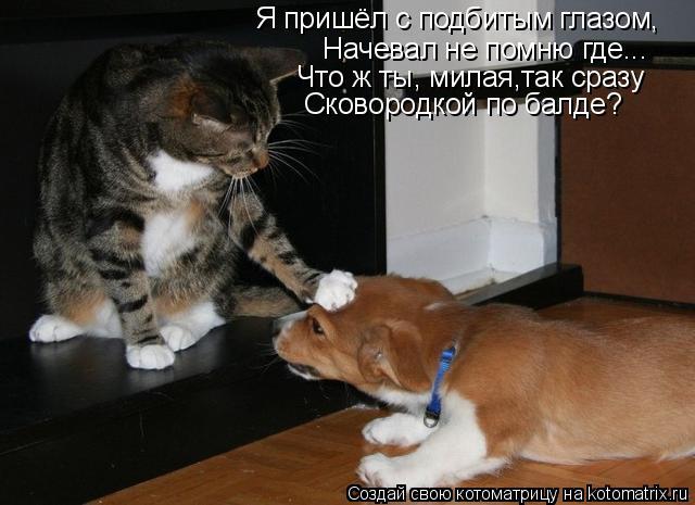 Котоматрица: Я пришёл с подбитым глазом, Начевал не помню где... Что ж ты, милая,так сразу Сковородкой по балде?