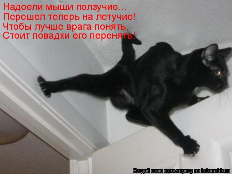 Котоматрица: Надоели мыши ползучие... Перешел теперь на летучие! Чтобы лучше врага понять, Стоит повадки его перенять!
