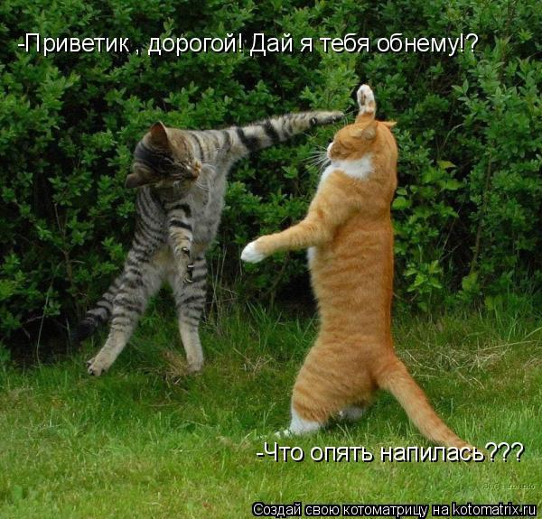 Котоматрица: -Приветик , дорогой! Дай я тебя обнему!? -Что опять напилась???