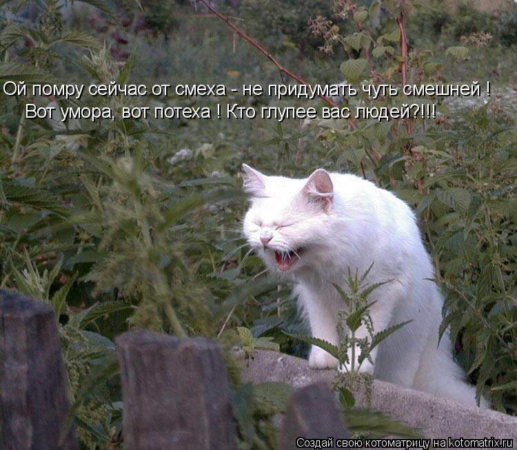 Котоматрица: Ой помру сейчас от смеха - не придумать чуть смешней ! Вот умора, вот потеха ! Кто глупее вас людей?!!!