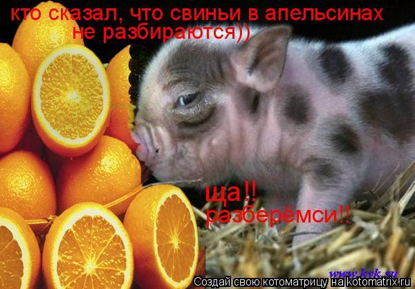 Котоматрица: кто сказал, что свиньи в апельсинах  не разбираются)) ща!! разберёмси!!