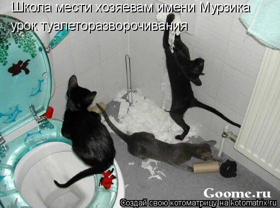 Котоматрица: Школа мести хозяевам имени Мурзика урок туалеторазворочивания