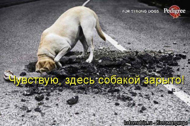 Котоматрица: Чувствую, здесь собакой зарыто!