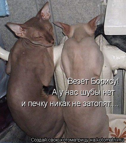 Котоматрица: Везёт Борису! А у нас шубы нет и печку никак не затопят....