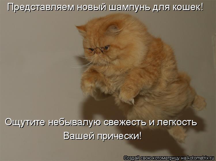 Котоматрица: Представляем новый шампунь для кошек! Ощутите небывалую свежесть и легкость Вашей прически!