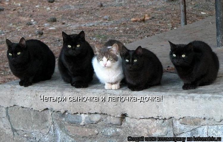 Котоматрица: Четыри сыночка и лапочка-дочка!