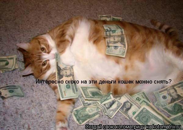 Котоматрица: Интересно скоко на эти деньги кошек можно снять?