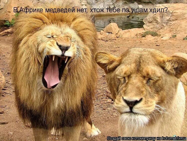 Котоматрица: В Африке медведей нет, хтож тебе по ушам хдил?