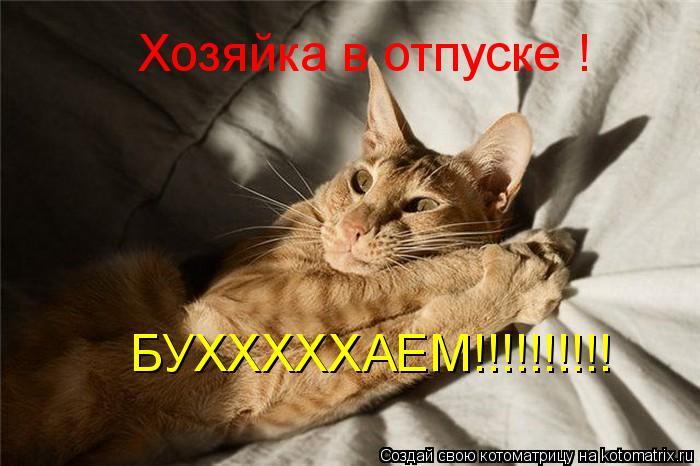 Котоматрица: Хозяйка в отпуске ! БУХХХХХАЕМ!!!!!!!!!!