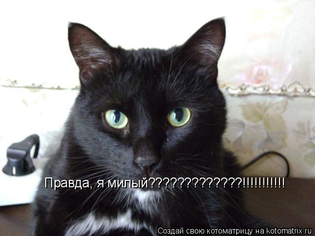 Котоматрица: Правда, я милый?????????????!!!!!!!!!!!