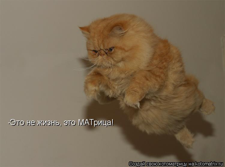 Котоматрица: -Это не жизнь, это МАТрица!
