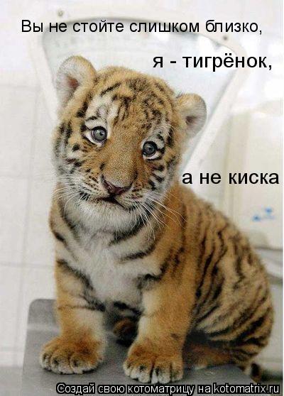 Котоматрица: Вы не стойте слишком близко, я - тигрёнок, а не киска
