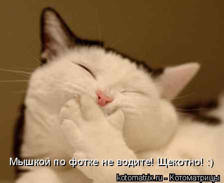 Котоматрица: Мышкой по фотке не водите! Щекотно! :)
