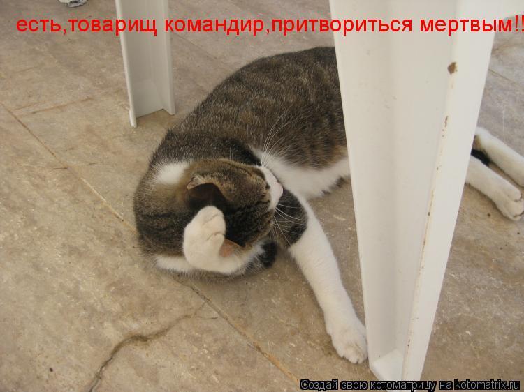 Котоматрица: есть,товарищ командир,притвориться мертвым!!!