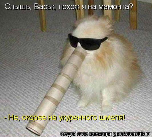 Котоматрица: Слышь, Васьк, похож я на мамонта? - Не, скорее на укуренного шмеля!
