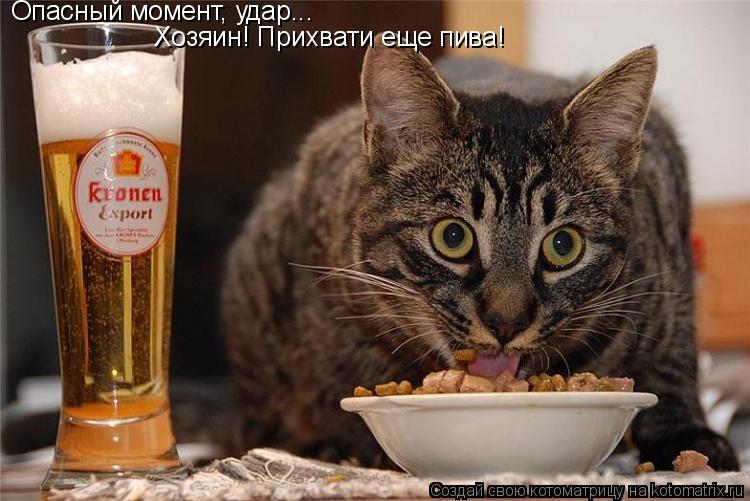 Котоматрица: Опасный момент, удар... Хозяин! Прихвати еще пива!
