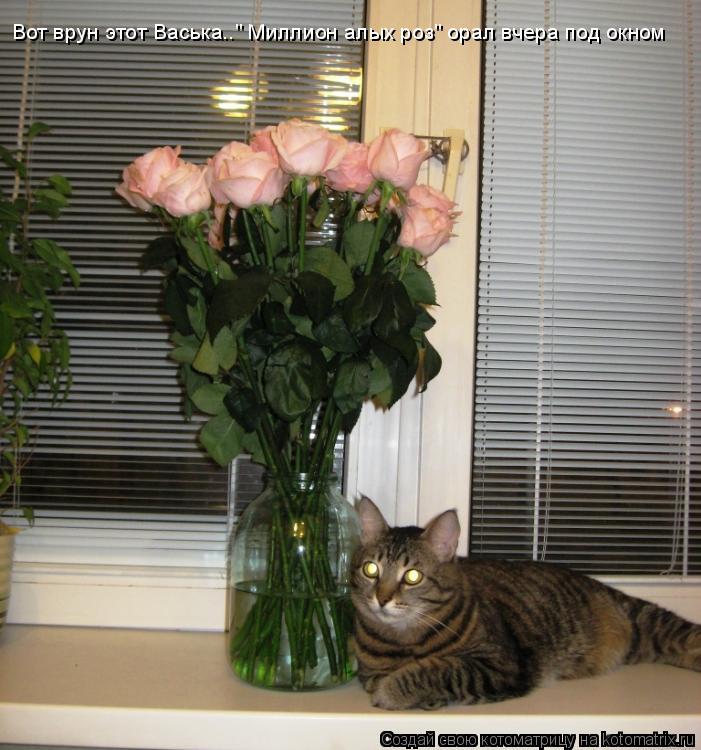"""Котоматрица: Вот врун этот Васька.."""" Миллион алых роз"""" орал вчера под окном"""