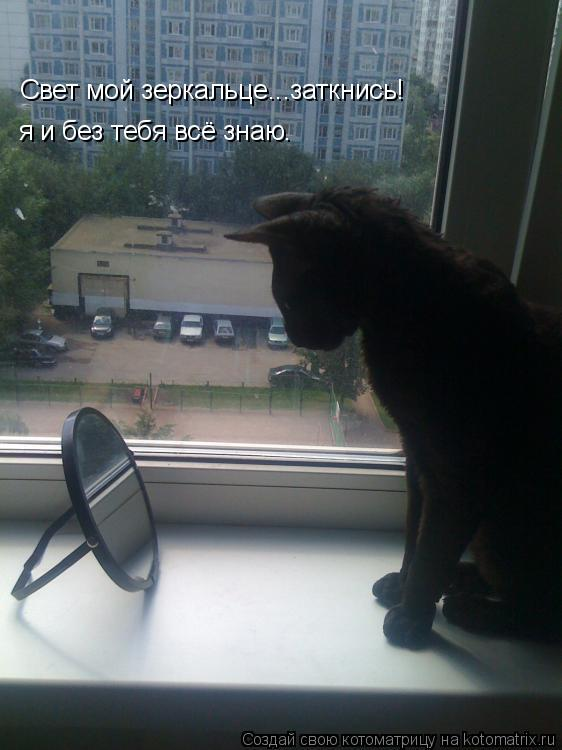 Котоматрица: Свет мой зеркальце...заткнись! я и без тебя всё знаю.