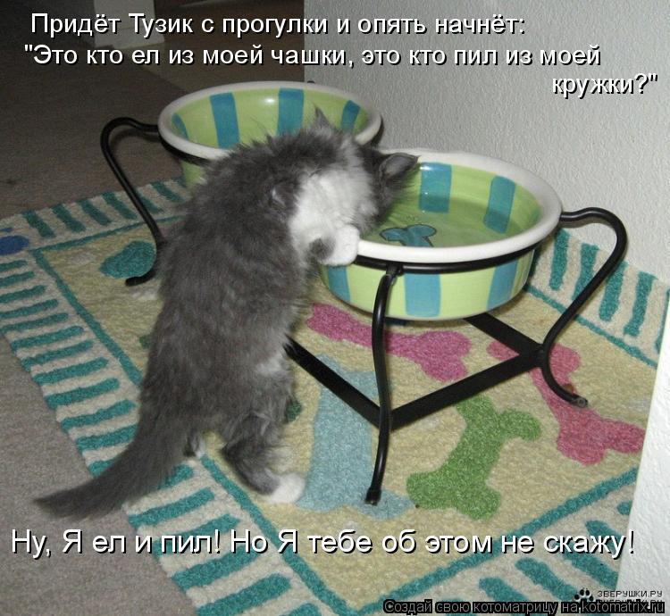 """Котоматрица: Придёт Тузик с прогулки и опять начнёт: """"Это кто ел из моей чашки, это кто пил из моей  кружки?"""" Ну, Я ел и пил! Но Я тебе об этом не скажу!"""